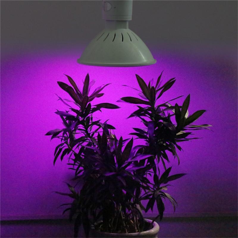 Lampa do roślin zawieszona nad doniczką z roślinami