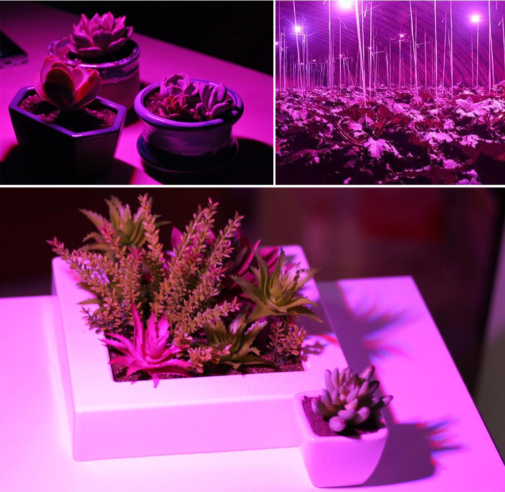 Rośliny oświetlone światłem z żarówki LED do roślin