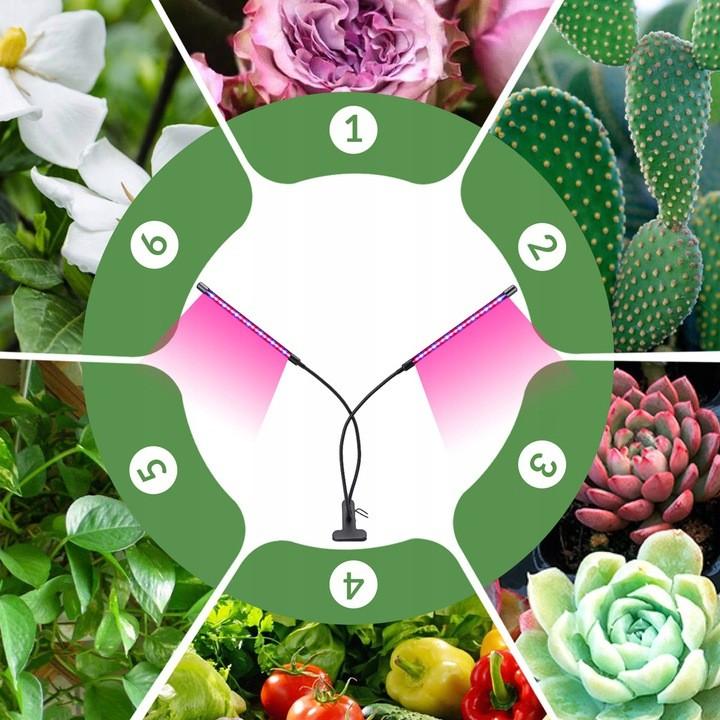 Lampa LED do roślin i różne gatunki roślin