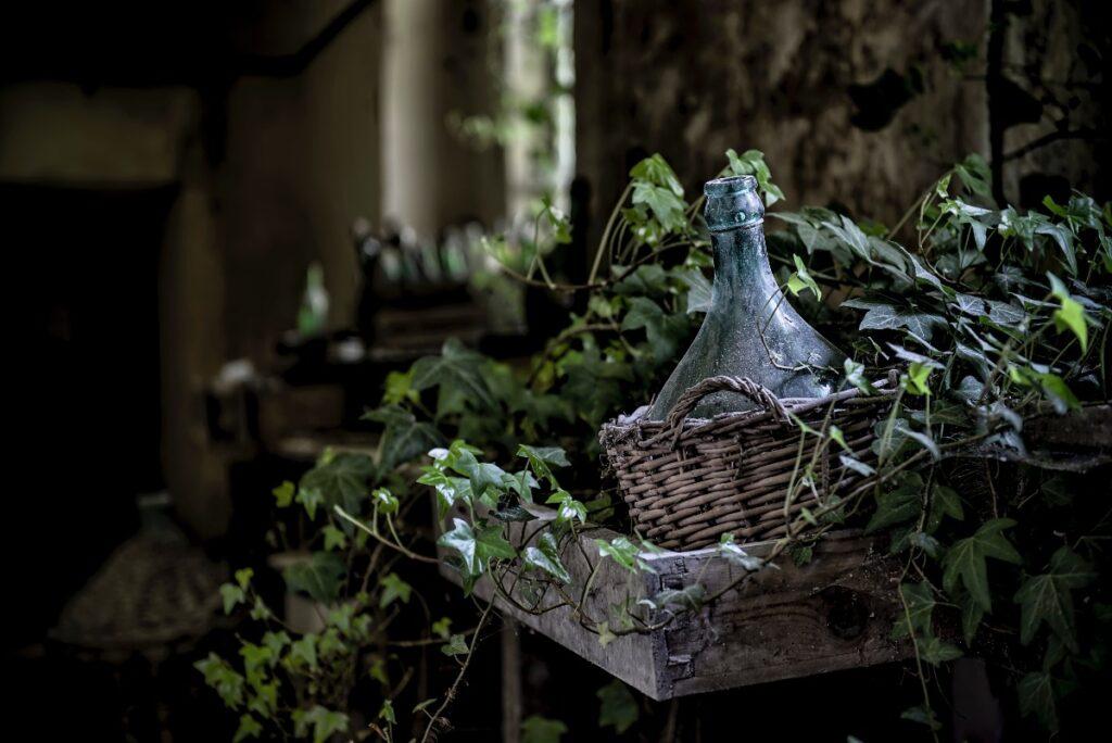 Jak zadbać o jakość powietrza w domu? Wypróbuj rośliny oczyszczające powietrze