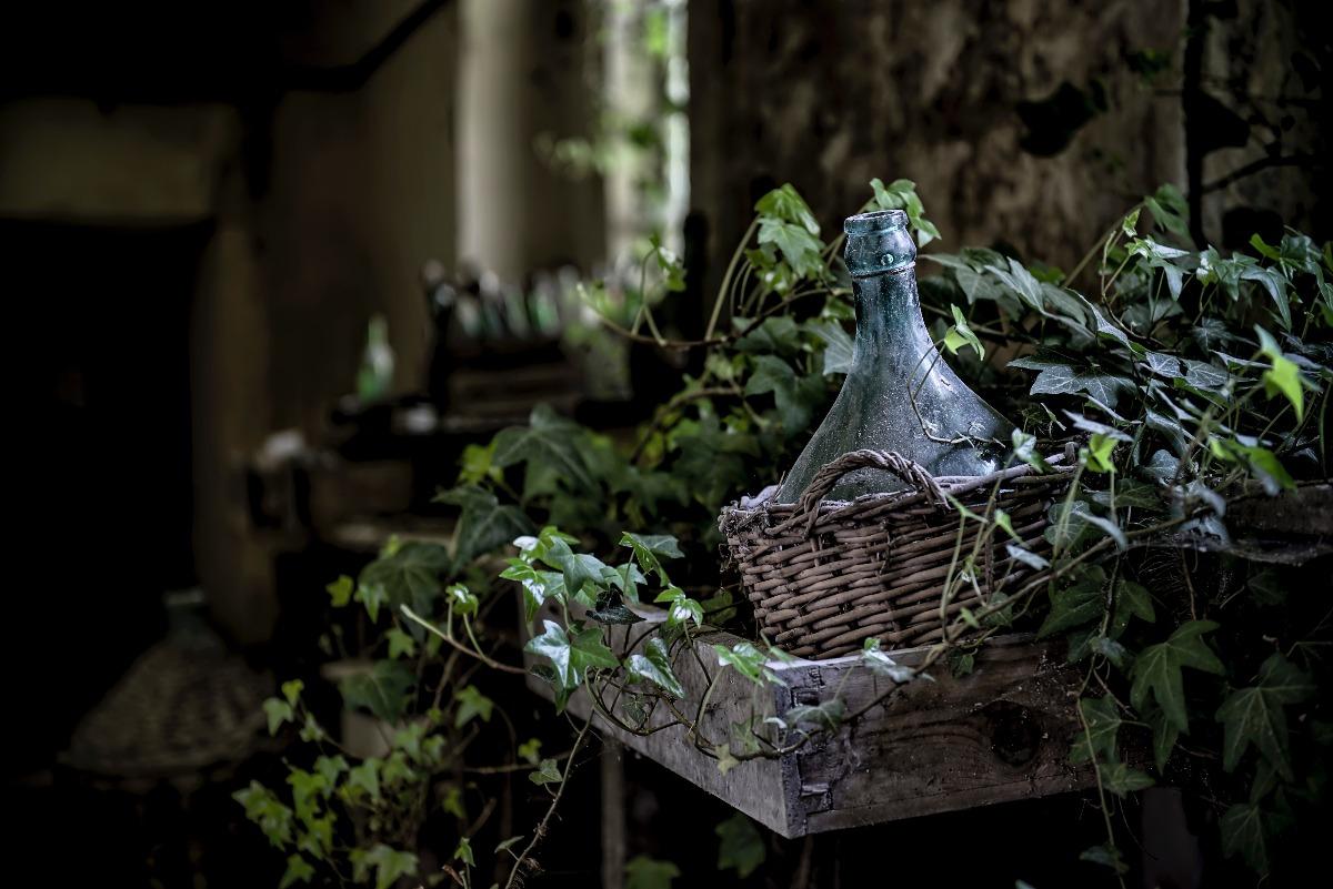 Rośliny oczyszczające powietrze - bluszcz pospolity w drewnianej donicy