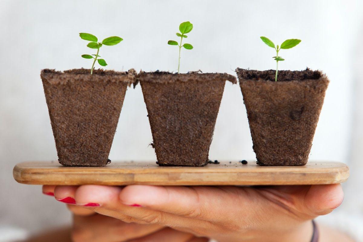 Wzrost roślin posadzonych w ziemi