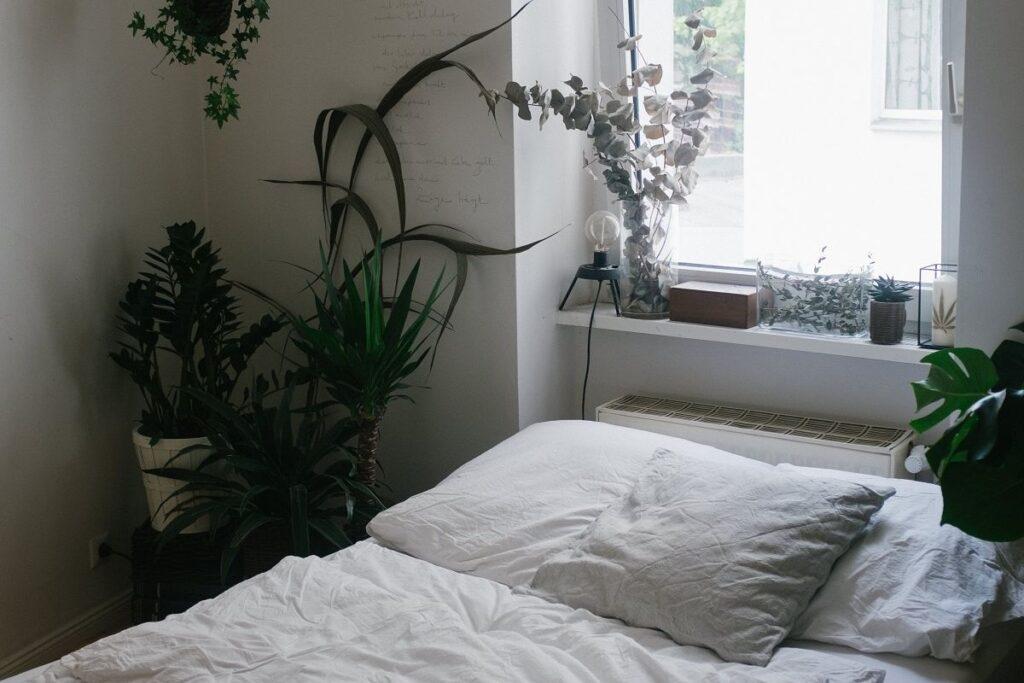 Kwiaty do sypialni oczyszczające powietrze