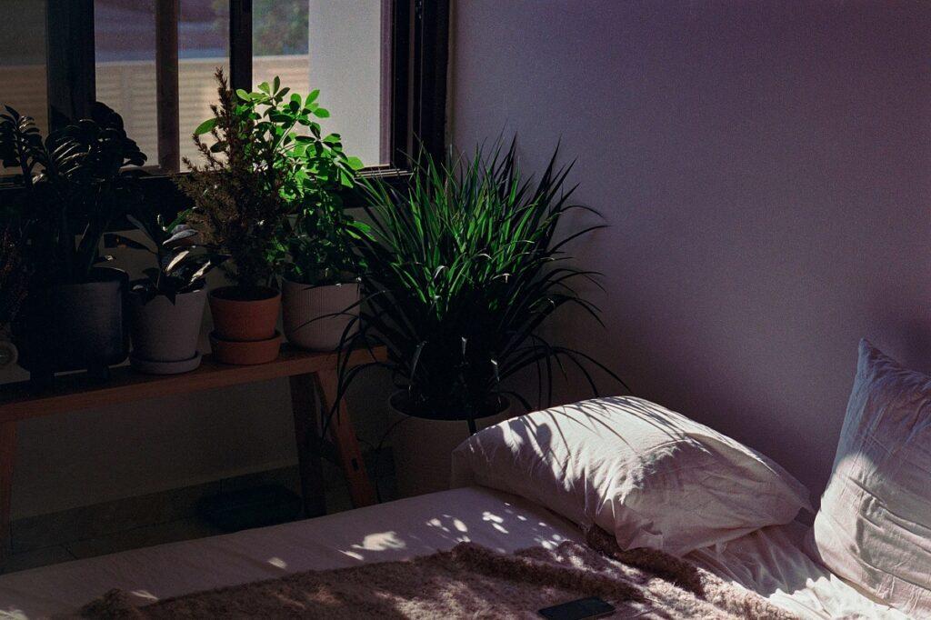 Kwiaty do sypialni stojące przy łóżku