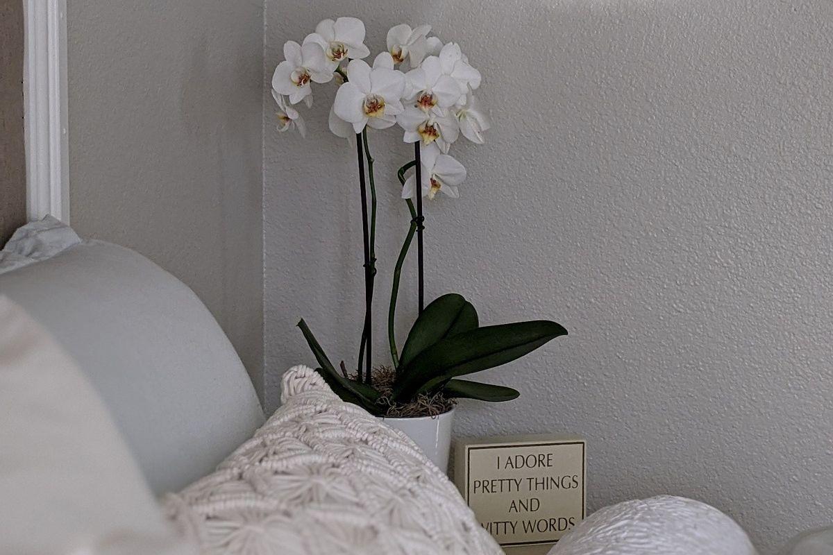 Kwiaty do sypialni - storczyk na szafce