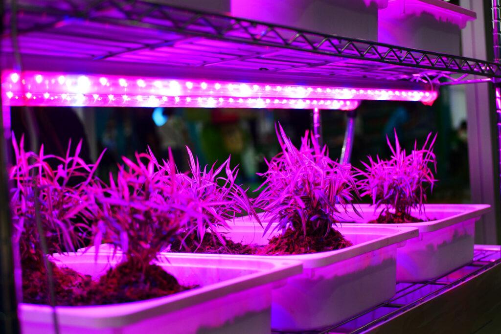 Lampy do roślin – jakie wybrać?
