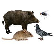 Odstraszacze zwierząt