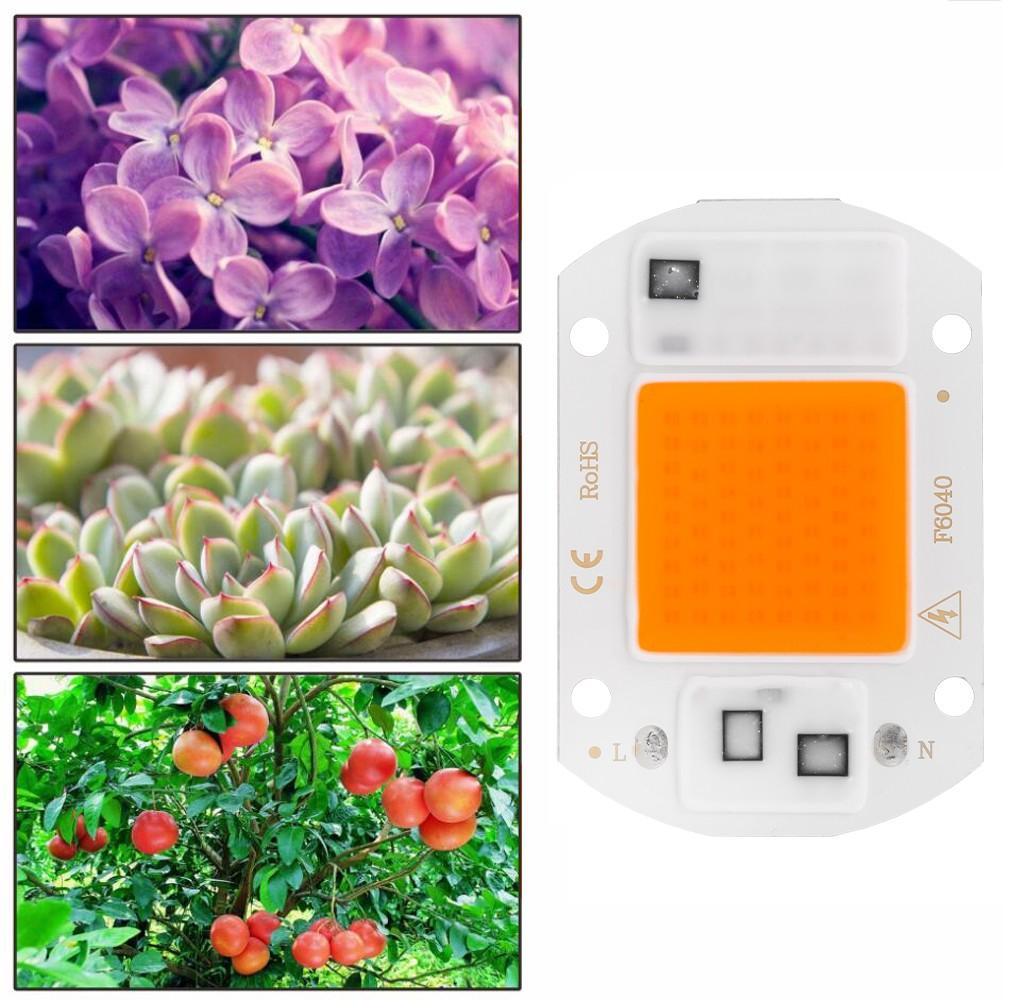 Lampa do roślin LED COB i rośliny, które można nią oświetlać